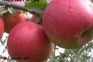 melba-red