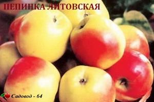 pepinka-litovskaya