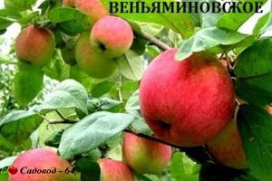 venyaminovskoe