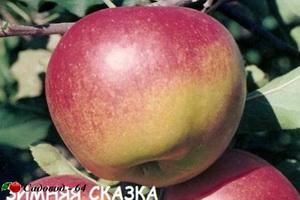 zimnyaya-skazka